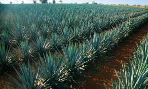 Secretos del Tequila