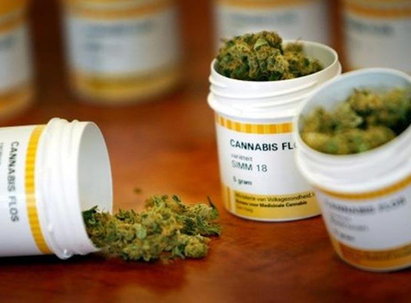 Cannabis Medicinal: Una Discusión Acalorada